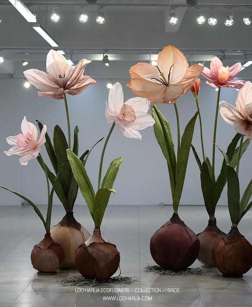 Cette image a un attribut alt vide; le nom du fichier est lodharlia-ecoflowers-2.jpg